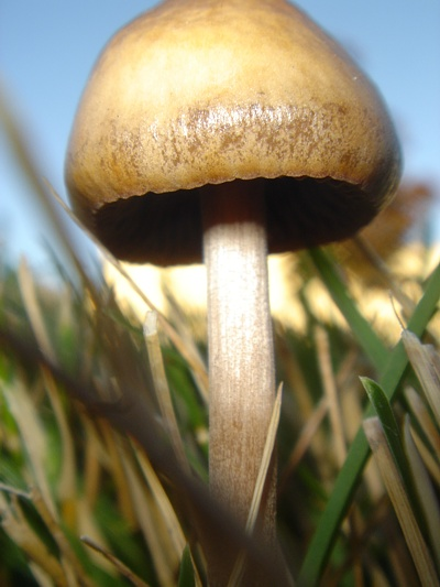 Tiny mushroom.
