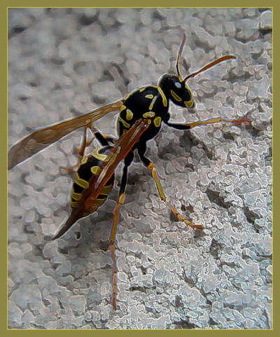 Wasp With Outlines